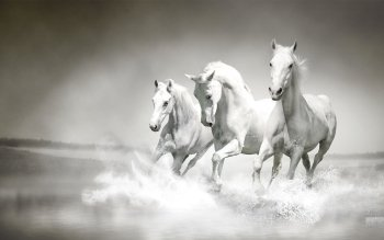 Animal - Horse Wallpapers and Backgrounds ID : 506300