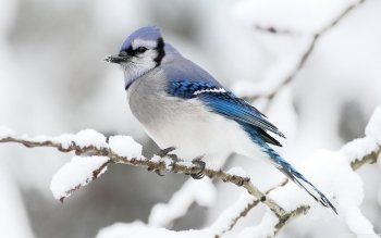 Animal - Bird Wallpapers and Backgrounds ID : 506963