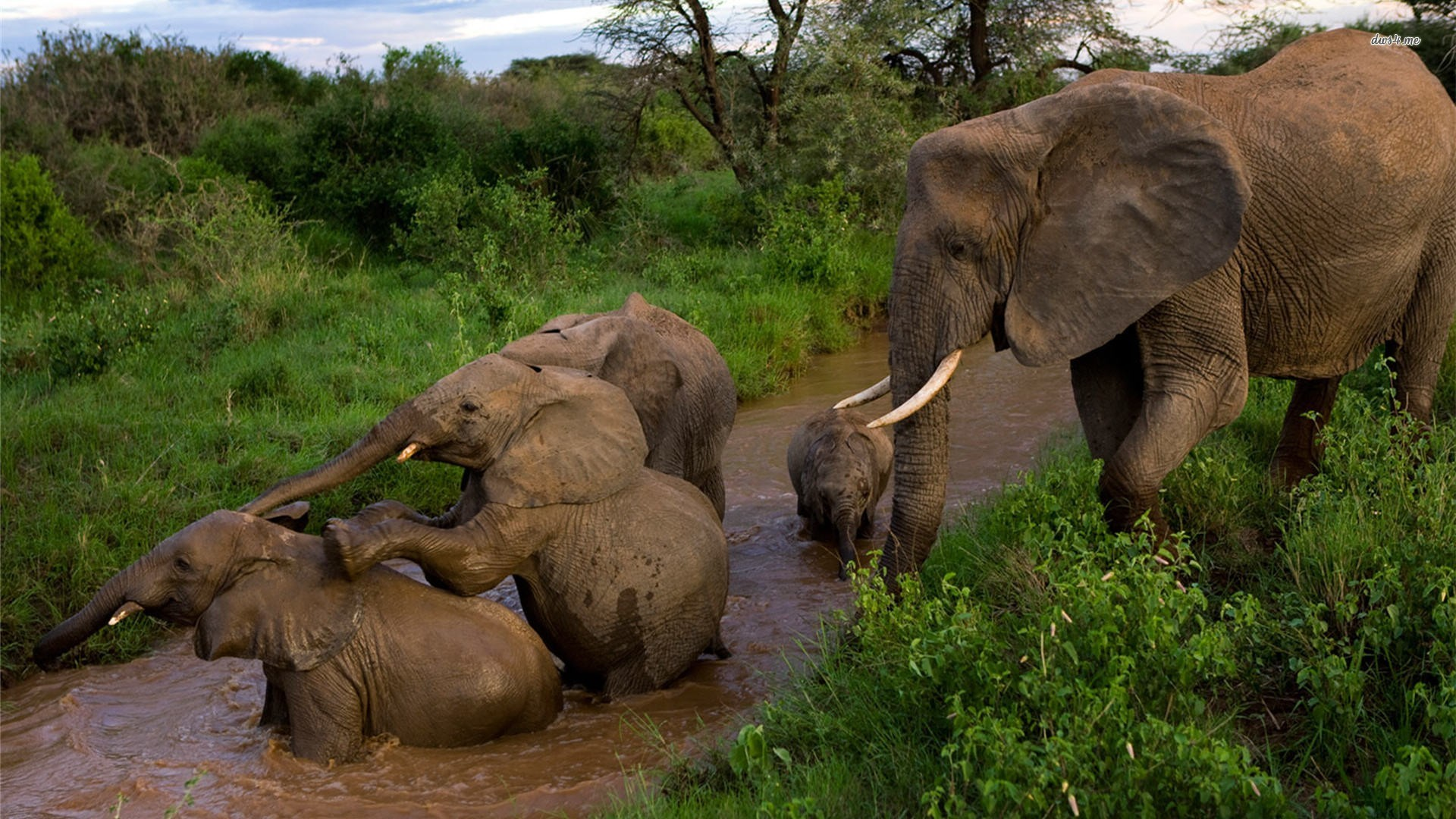 elephant Comput... Animal Wallpapers Hd Widescreen