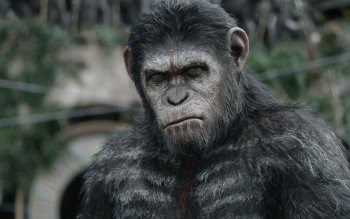 Films - Dawn Of The Planet Of The Apes Wallpapers and Backgrounds ID : 508611