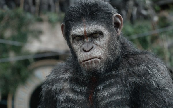 Movie Dawn of the Planet of the Apes HD Wallpaper   Background Image