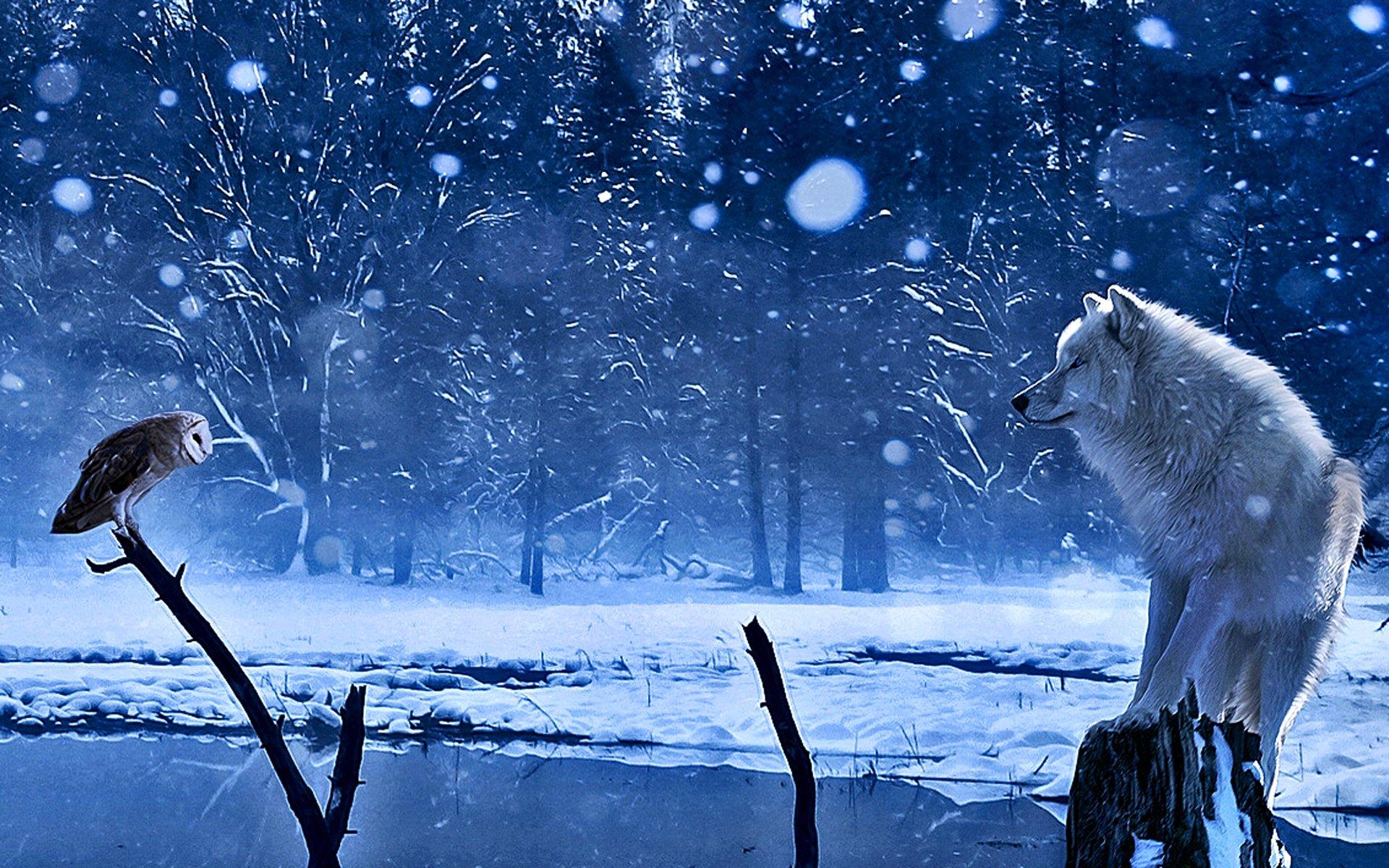 бесконечном ряду зимние картинки с волками нормальный кал