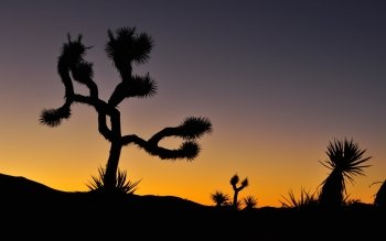Earth - Joshua Tree National Park Wallpapers and Backgrounds ID : 515748