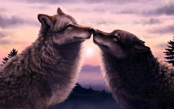 Animal - Wolf Wallpapers and Backgrounds ID : 517561