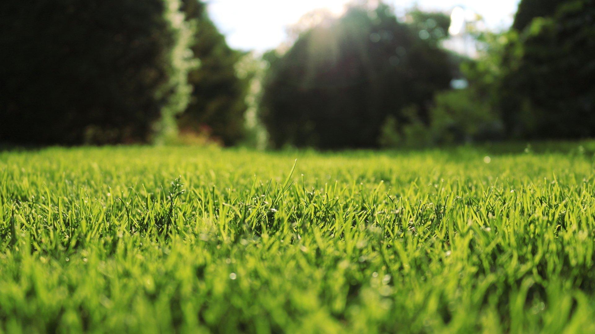 Green Grass HD Wallpaper   Background Image   1920x1080 ...