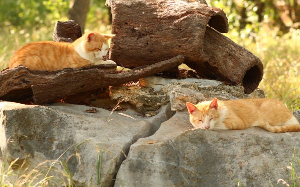 Animal Cat Cats Photography HD Wallpaper | Background Image