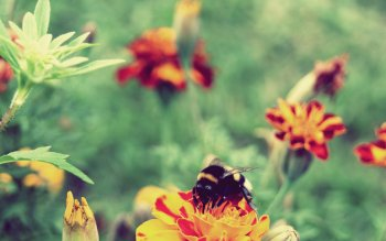 Animal - Bee Wallpapers and Backgrounds ID : 520279