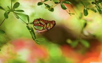 Animal - Butterfly Wallpapers and Backgrounds ID : 523264