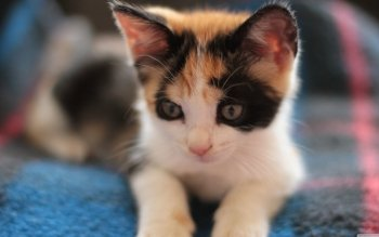 236 4k Ultra Hd Kitten Wallpapers Background Images Wallpaper Abyss
