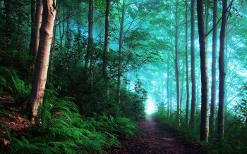 Earth - Forest Wallpapers and Backgrounds ID : 523647