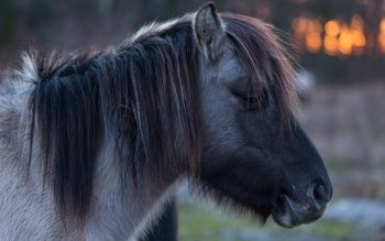 Animal - Horse Wallpapers and Backgrounds ID : 523714