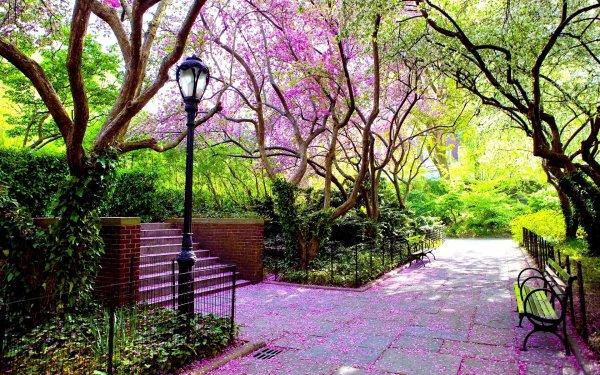 Fotografía Parque Banco Camino Árbol Primavera Florecer Street Light Fondo de pantalla HD | Fondo de Escritorio