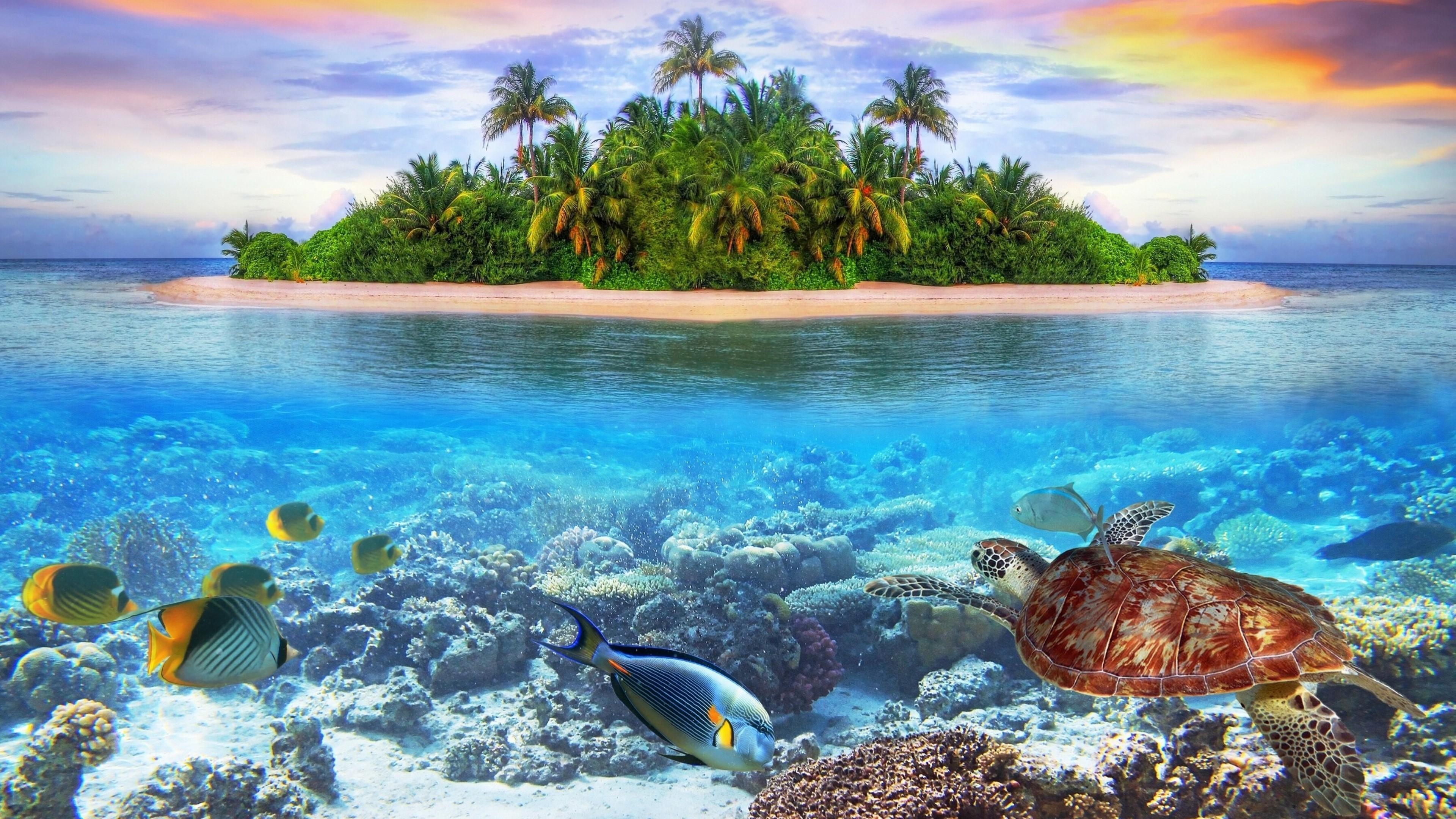 Underwater 4k Ultra Hd Wallpaper Background Image 3840x2160 Id