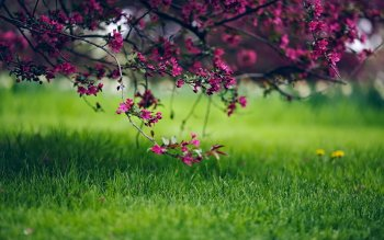 Earth - Blossom Wallpapers and Backgrounds ID : 526373