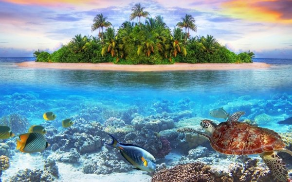Earth Underwater Reef Island Turtle Fish Maldives HD Wallpaper | Background Image