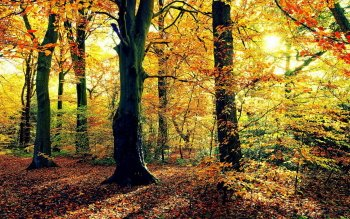 Earth - Autumn Wallpapers and Backgrounds ID : 528360