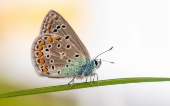 Animal - Butterfly Wallpapers and Backgrounds ID : 530675