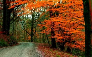 Earth - Autumn Wallpapers and Backgrounds ID : 531469