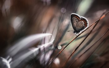 Animal - Butterfly Wallpapers and Backgrounds ID : 534040