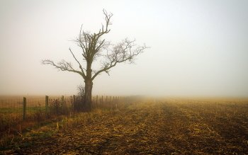 Earth - Fog Wallpapers and Backgrounds ID : 535169