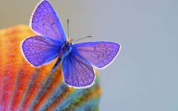 Animal - Butterfly Wallpapers and Backgrounds ID : 535363