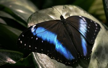 Animal - Butterfly Wallpapers and Backgrounds ID : 535394