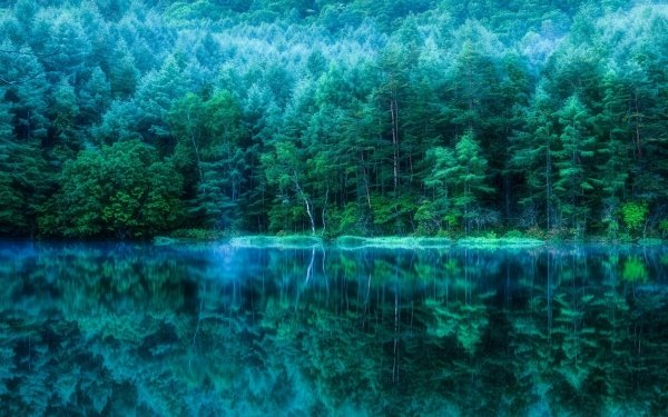Earth Reflection Forest Japan Pond HD Wallpaper | Background Image