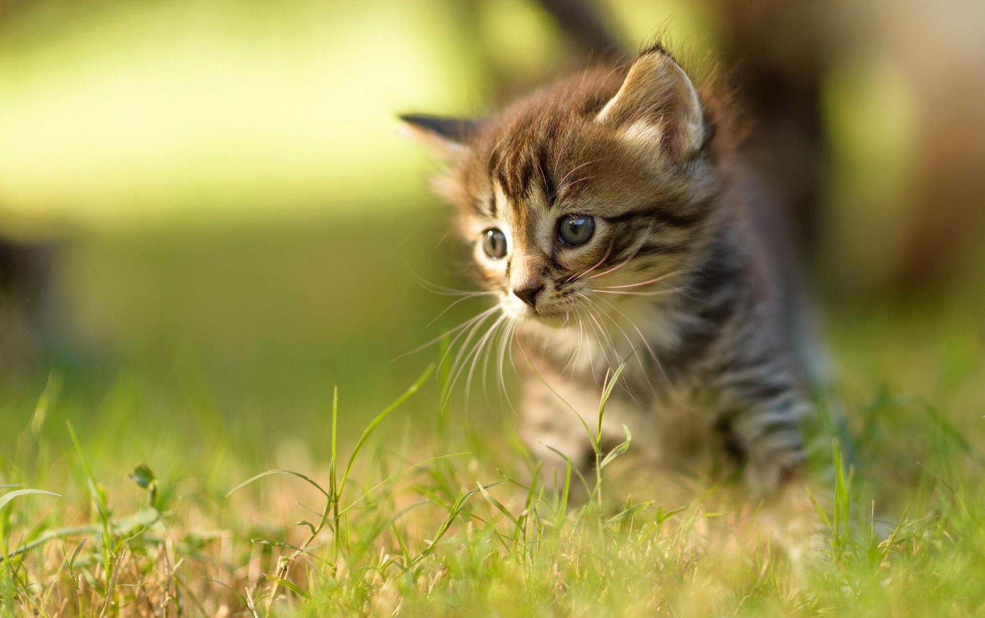 Katze hd wallpaper hintergrund 2000x1254 id 546331 - Cute kitten wallpaper free download ...
