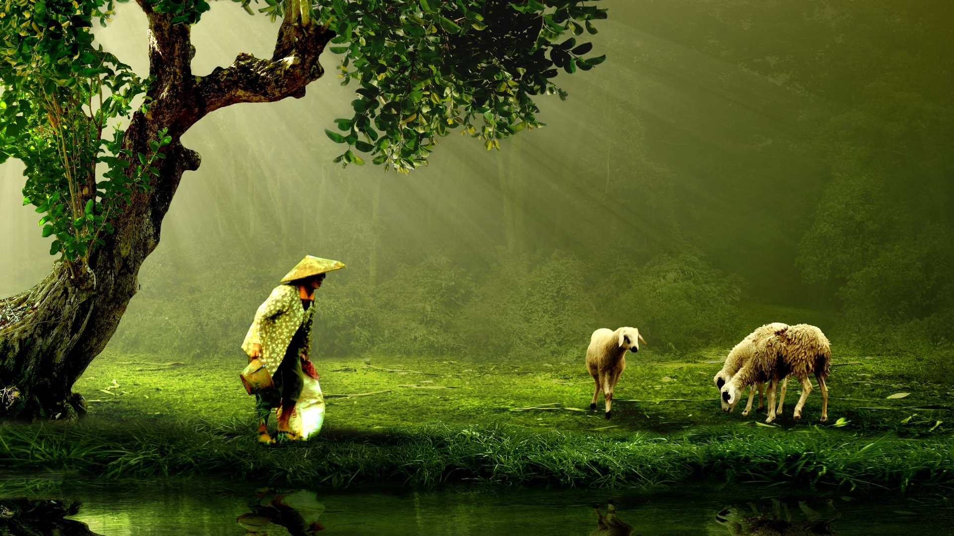 Animal - Sheep  Animal Wallpaper