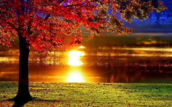 Earth Fall Tree River Evening Sunset Reflection HD Wallpaper | Background Image
