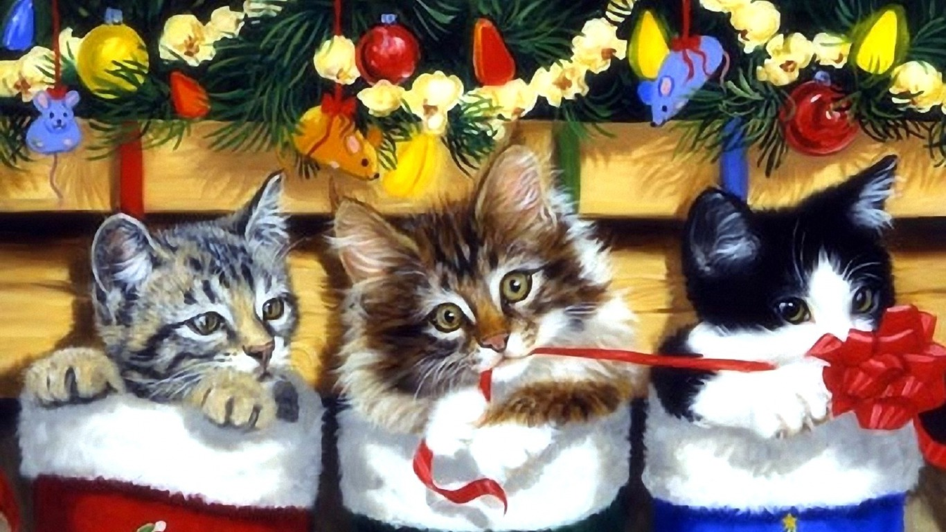 Kitten Stocking Wallpaper And Background Image 1366x768