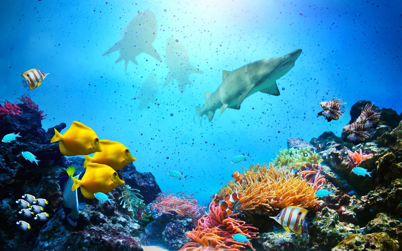Fish Hd Wallpaper Background Image 2880x1800 Id