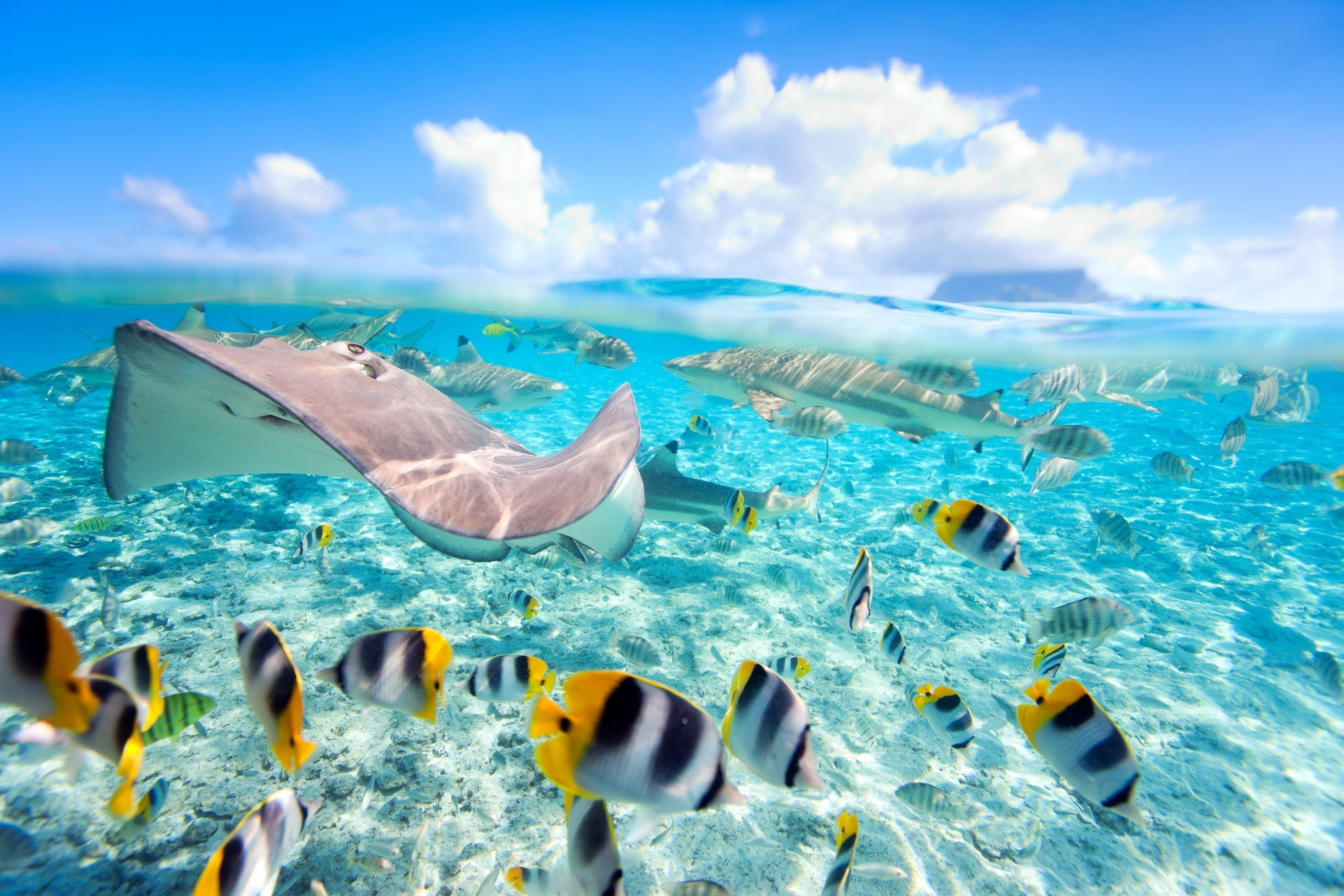 sting ray wallpaper  10 Stingray HD Wallpapers | Background Images - Wallpaper Abyss