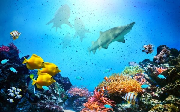 Animal Fish Fishes Shark Coral Reef Underwater HD Wallpaper   Background Image
