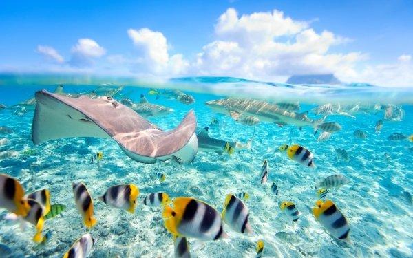 Animal Fish Fishes Stingray Shark Underwater Reef HD Wallpaper | Background Image