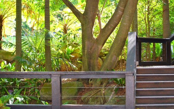 Photography Park South Bank Parklands Brisbane Queensland Australia Stairs Tree Plant Fern HD Wallpaper | Background Image