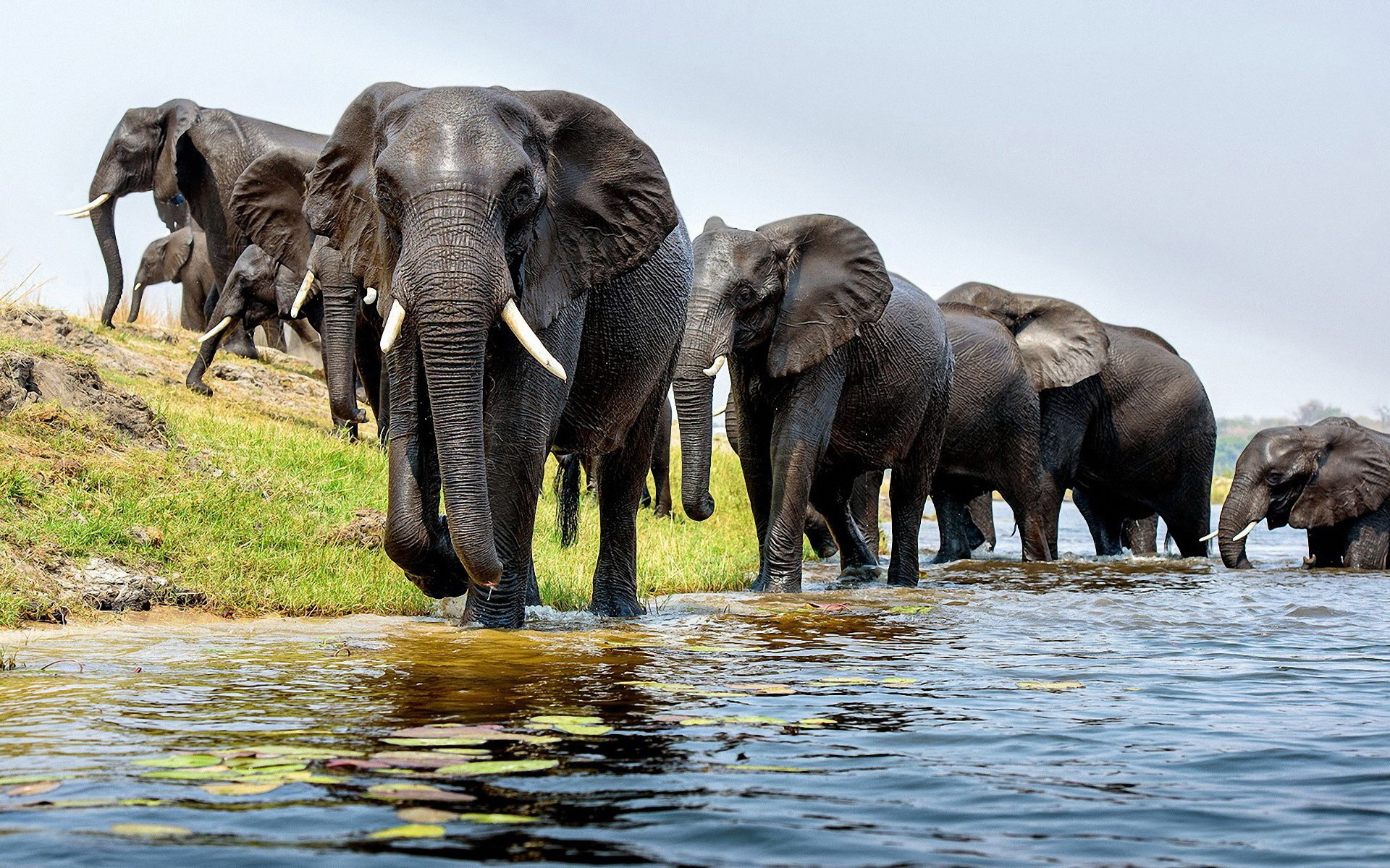 Hd wallpaper elephant - Hd Wallpaper Background Id 565134 1920x1200 Animal Elephant