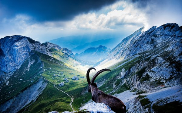 Animal Bighorn Sheep Goat Mount Pilatus Switzerland Mountain Landscape Sky Cloud HD Wallpaper | Background Image