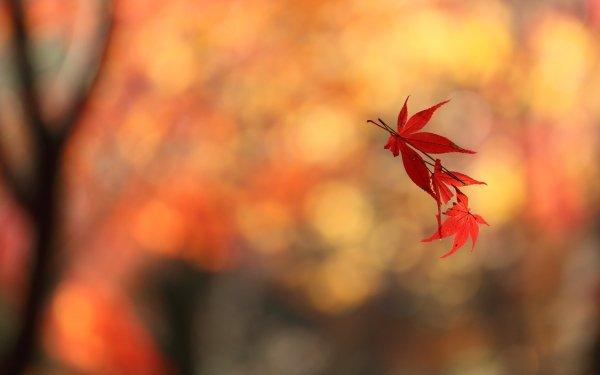 Earth Leaf Floating Maple Leaf Fall Bokeh HD Wallpaper | Background Image