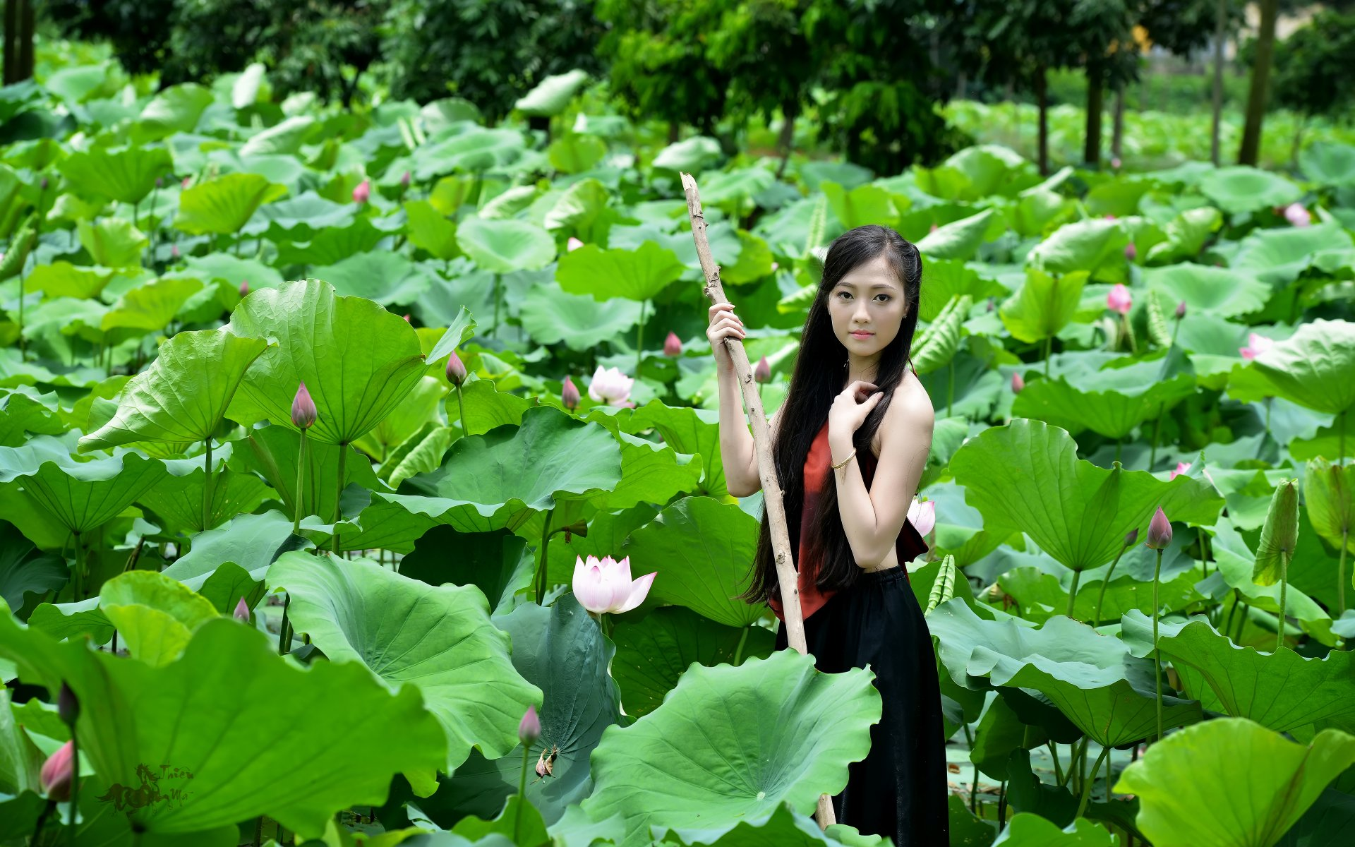 Women - Asian  Girl Woman Vietnamese Pond Lotus Leaf Wallpaper