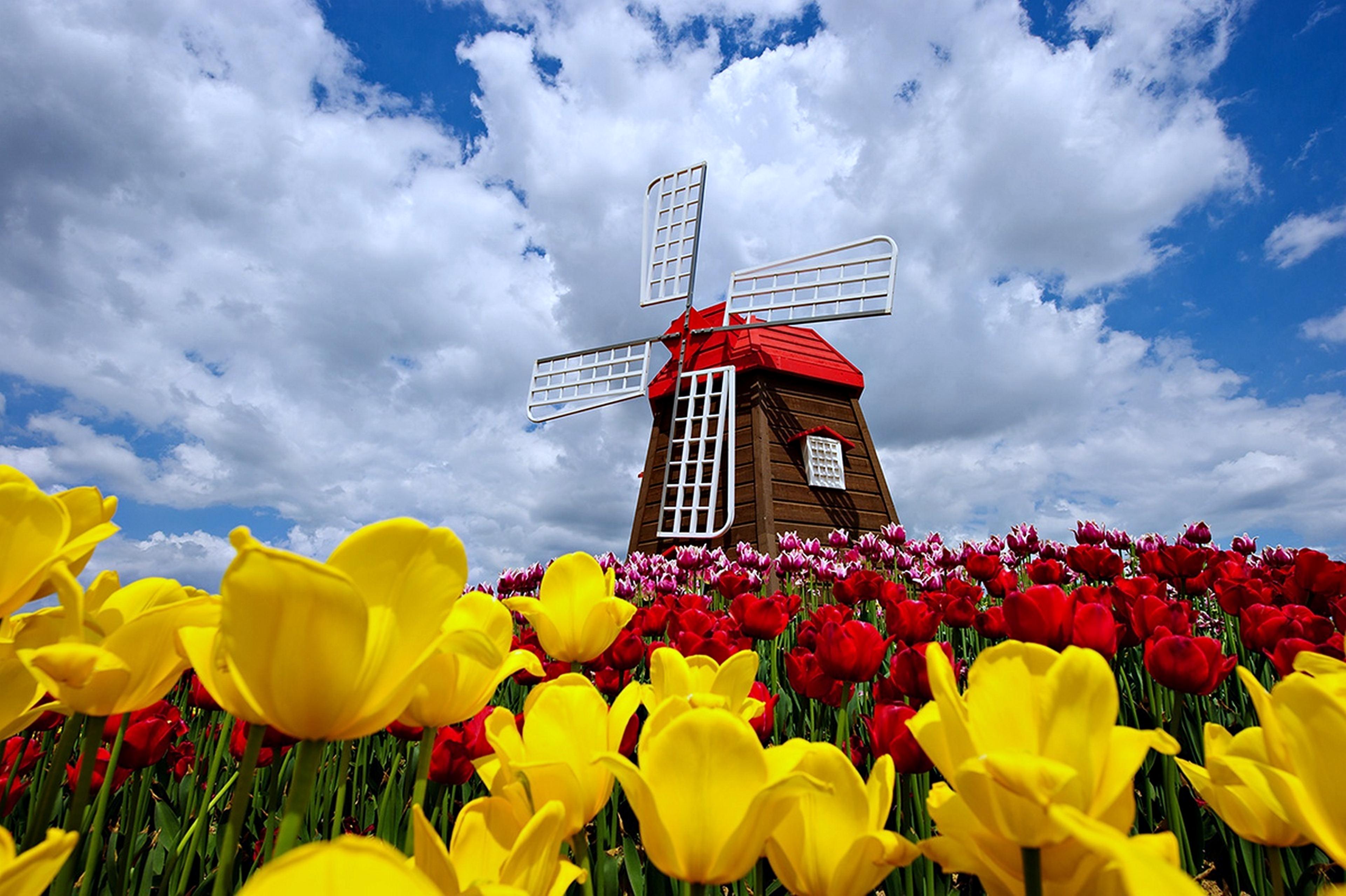 Spring 4k ultra hd fond d 39 cran and arri re plan for Fond ecran casa de papel
