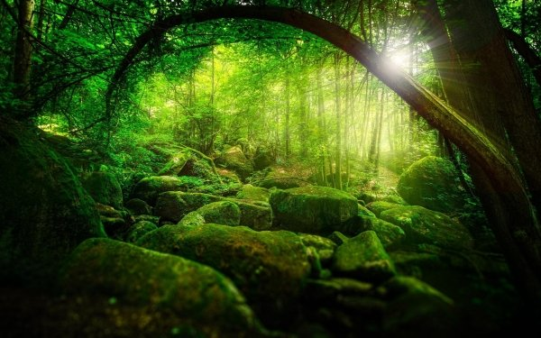 Earth Forest Moss Stone Sunbeam Nature Rock Germany Bavaria HD Wallpaper | Background Image
