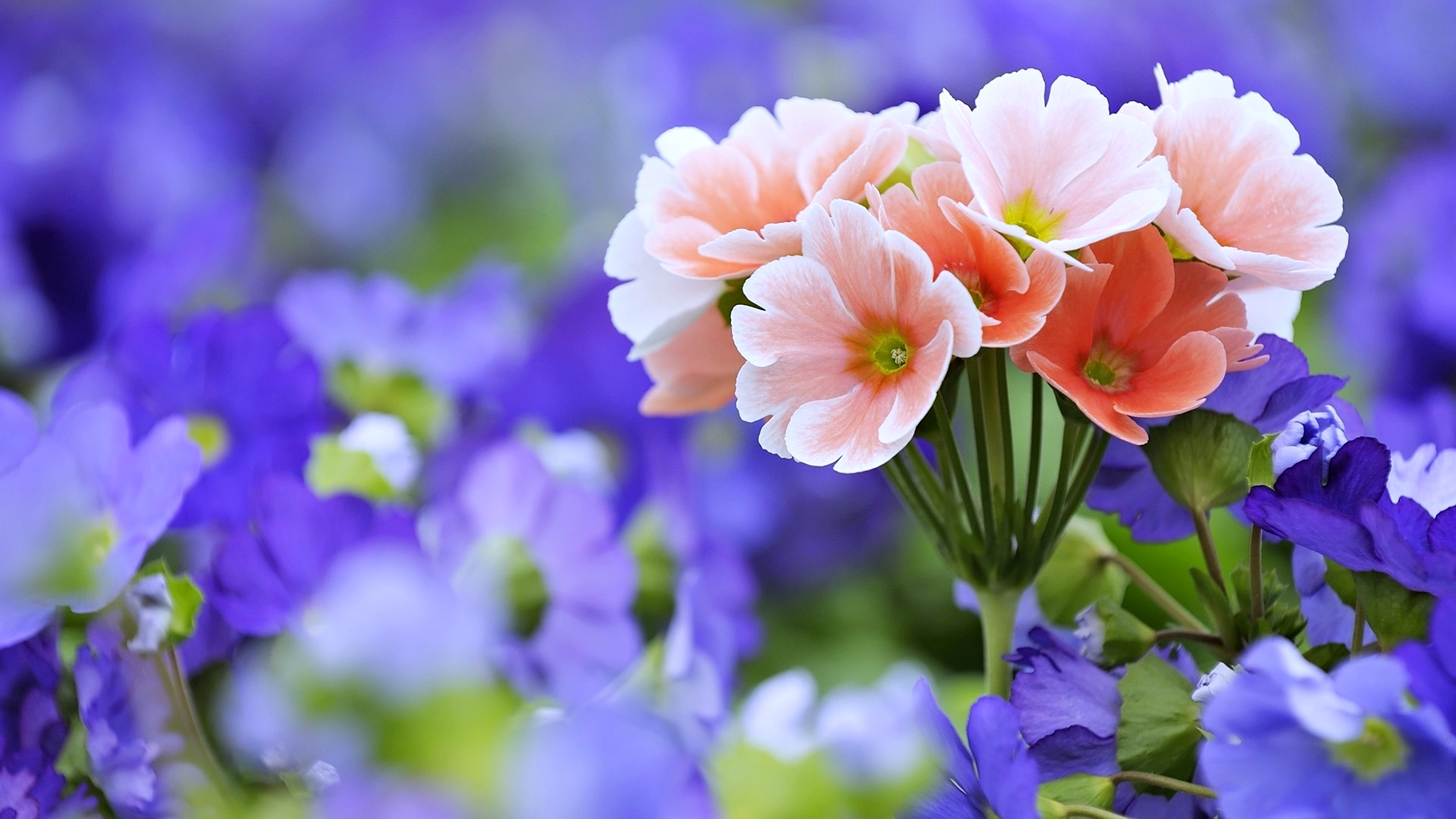 13954 flowers hd wallpapers | background images - wallpaper abyss
