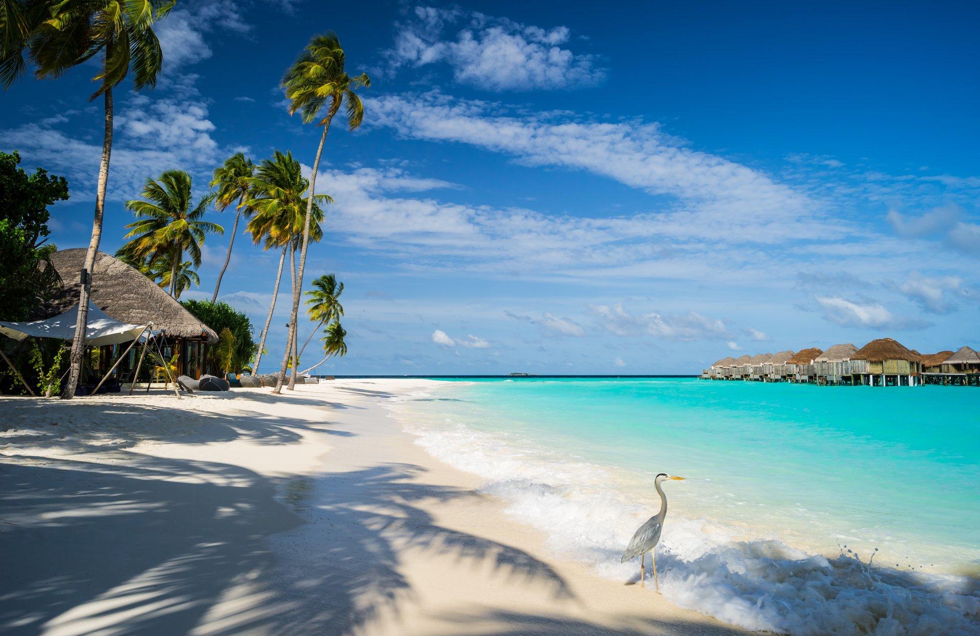 Photography - Tropical  Bird Sea Beach Holiday Tropics Maldives Constance Halaveli Resort Breeze Sky Palm Tree Boat Resort Wallpaper