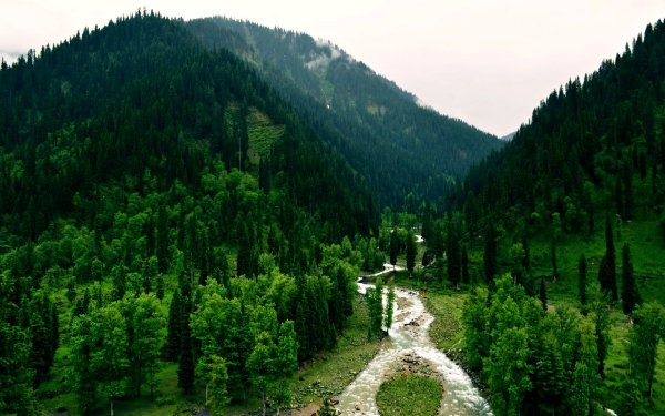 Earth Forest Tao-Butt Kashmir Pakistan Tree River Nature Landscape HD Wallpaper   Background Image