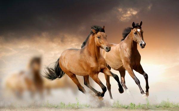 Animal Horse Blur Running HD Wallpaper | Background Image