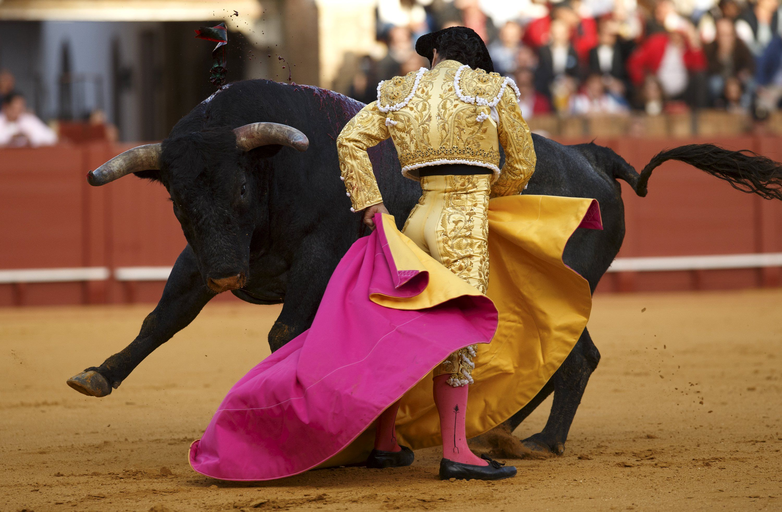 Bull Vs Matador Other Sports Background Wallpapers on Desktop