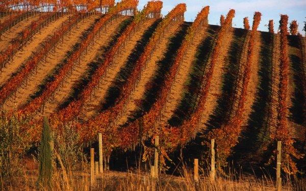Man Made Vineyard Landscape HD Wallpaper   Background Image