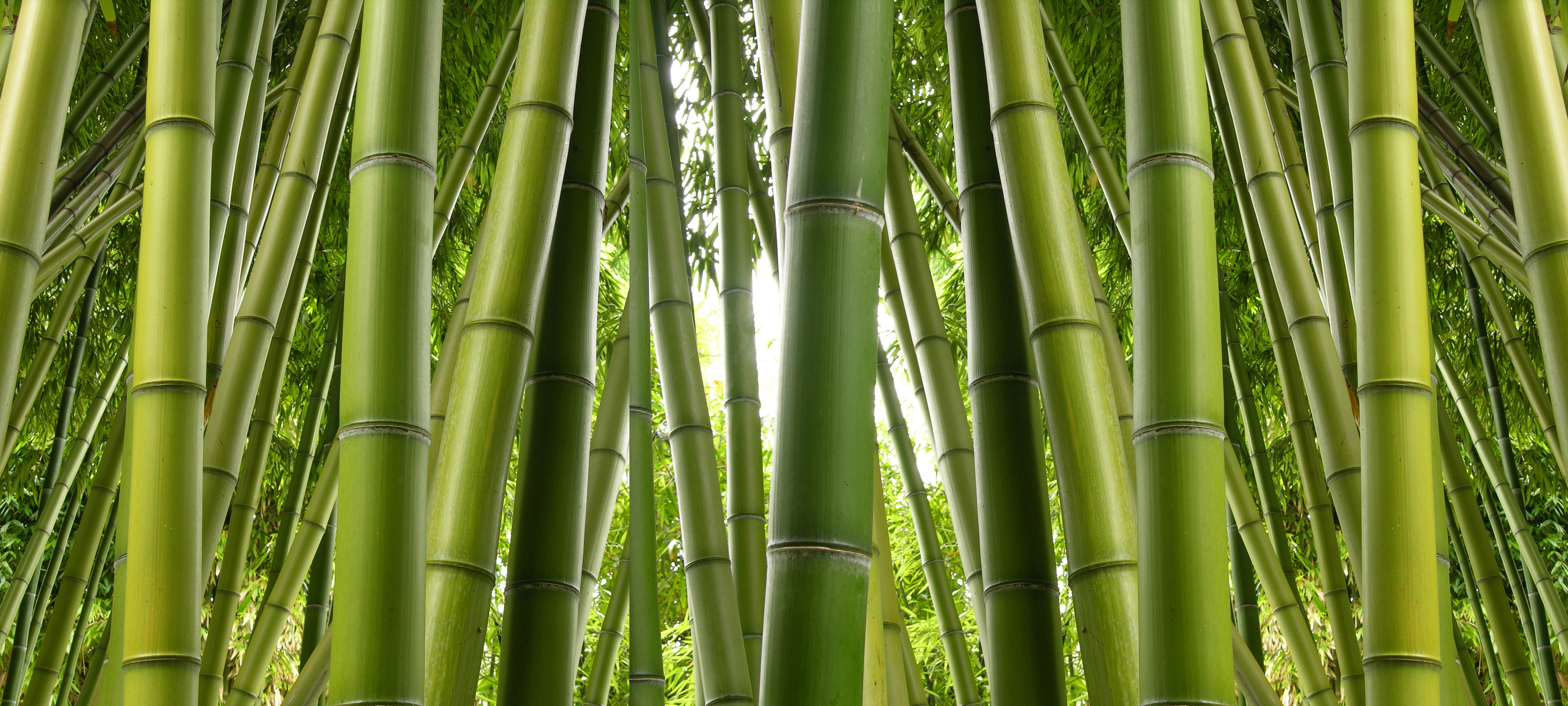 High Resolution Bamboo Wallpapers HD