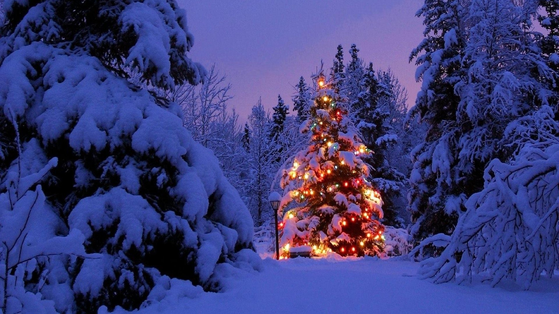 Blue Christmas Tree Forum Avatar: Christmas Tree Covered In Snow 4k Ultra HD Wallpaper